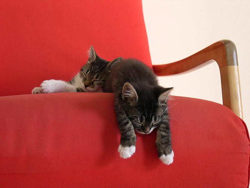 2 kittens taking a nap, by Stephan Brunet Macphreak, licensed under Creative Commons